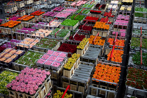 Aalsmeer Flower Auction The Aalsmeer flower market near Amsterdam ...