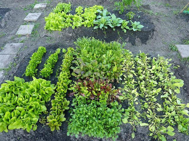 I want a garden like this... Image credit: Kattebelletje / Flickr