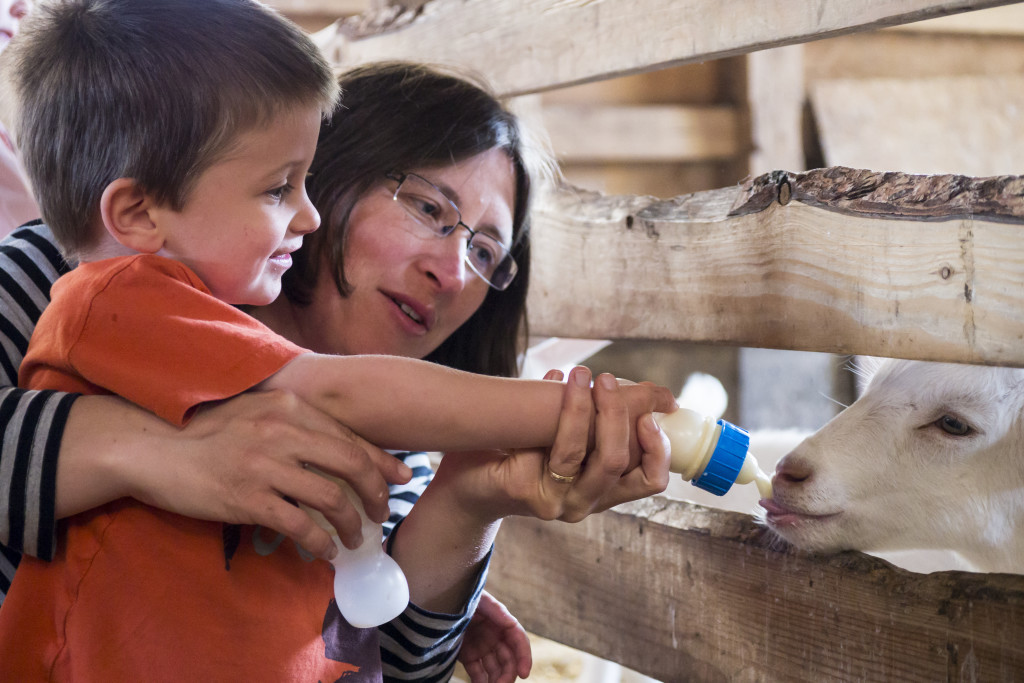 Giving baby goats a bottle of milk at Het Geertje farm.