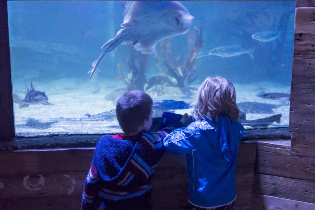 Watching sharks and rays at Sealife Scheveningen.
